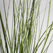 gllitter dew grass