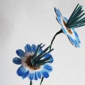phoomph tassel flowers