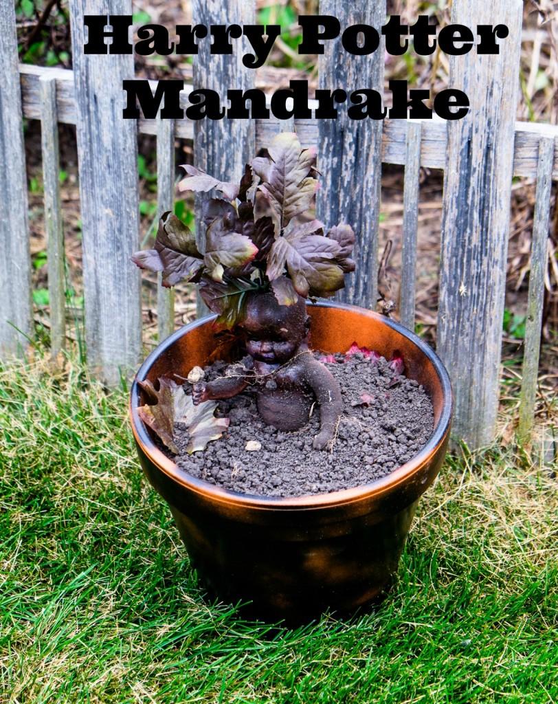 mandrake-812x1024