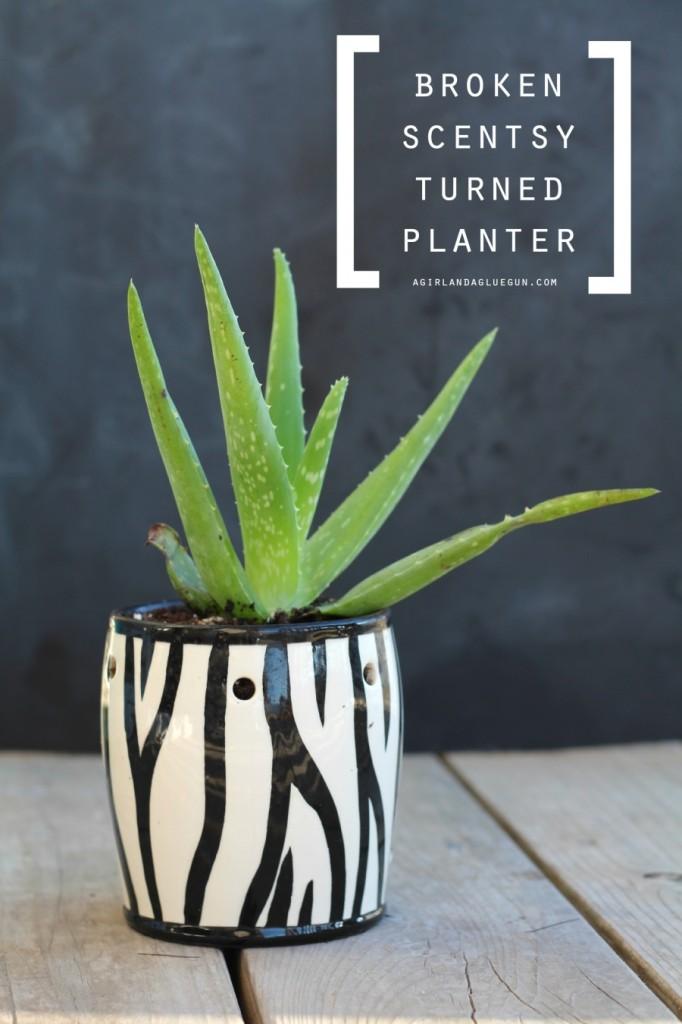 broken-scentsy-turned-planter-900x1350