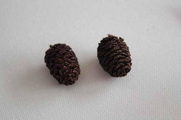 pick pinecones