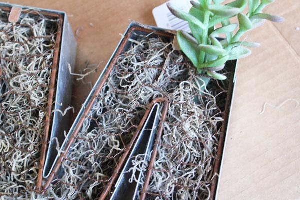 insert succulents