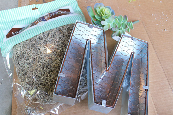 supplies-for-succulent-mono